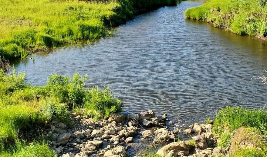 Typical chub creek