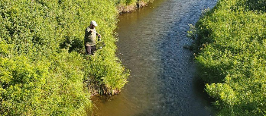 Minnow Trap for creek chubs