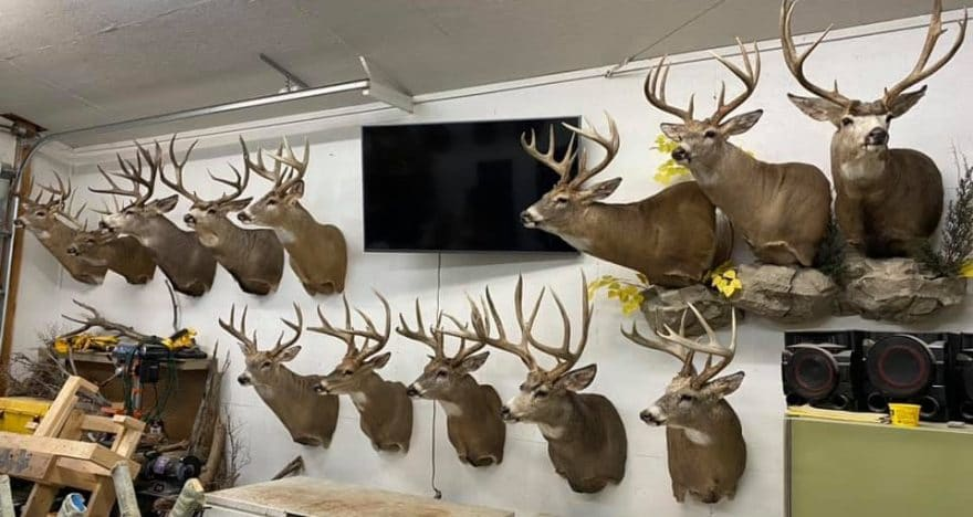 free deer mount