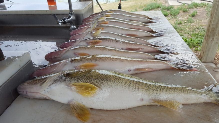 Fish Station 101
